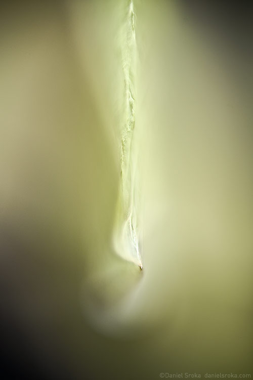 abstraction of a maple seed ©Daniel Sroka