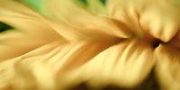 Exploring a sunflower