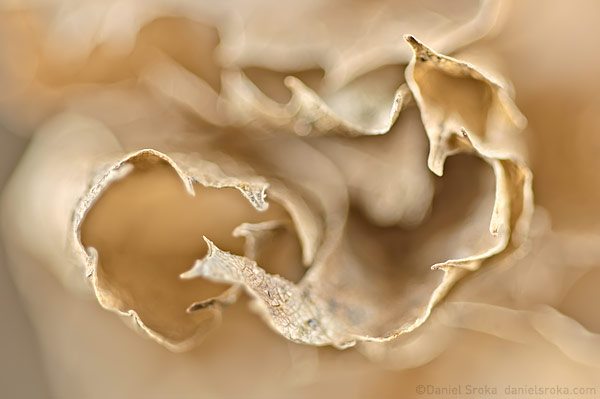 Abstract of a winter leaf ©Daniel Sroka
