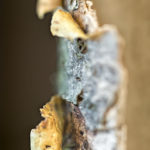 Disclosure - abstract photographs of peeling bark