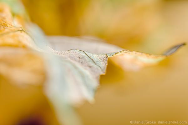 daniel sroka leaf2015-07a