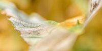 variations on a summer leaf