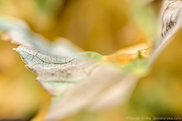 daniel sroka leaf2015-07b