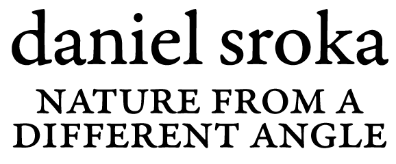 Daniel Sroka Fine Art Blog