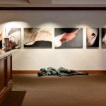 Daniel Sroka's botanical abstracts at the Miraval Arizon Resort and Spa