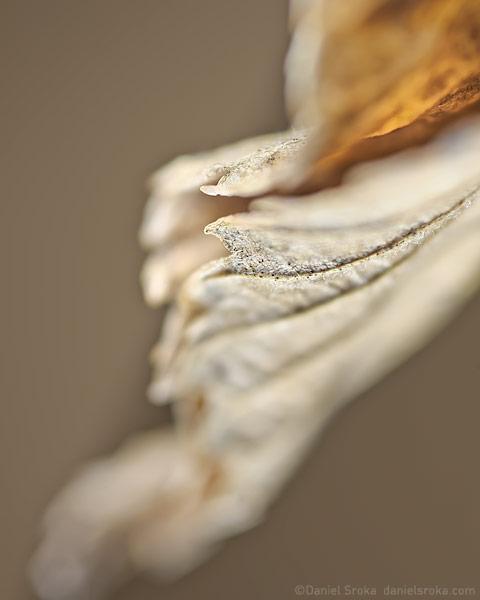 North Wind I, abstraction of an autumn leaf ©Daniel Sroka