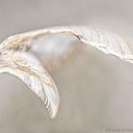 Airfoil by Daniel Sroka