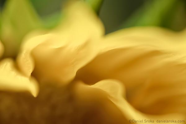 Furnace 1 (sunflower abstract) ©2009 Daniel Sroka