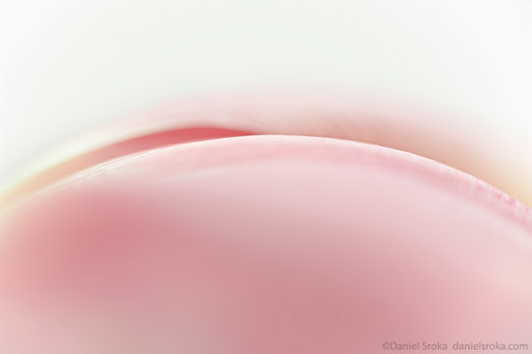 An abstract macro photograph of a tulip. Fine art nature photograph by Daniel Sroka.