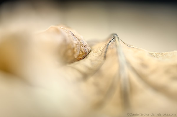 An abstract macro photograph of a fallen leaf. Fine art nature photograph by Daniel Sroka.