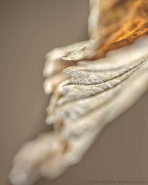 A photograph of a dried, autumn leaf. Fine art nature photograph by Daniel Sroka.