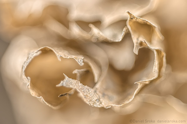 An abstract photograph of a leaf that had been blown about all winter. Fine art nature photograph by Daniel Sroka.