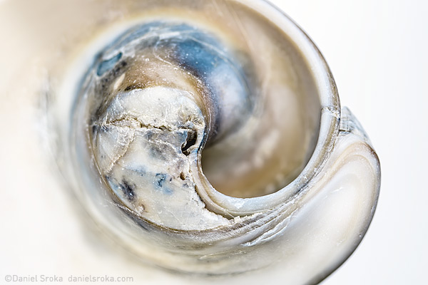 An abstraction of a sea shell found on the shore of Cape May, New Jersey. Fine art nature photograph by Daniel Sroka.