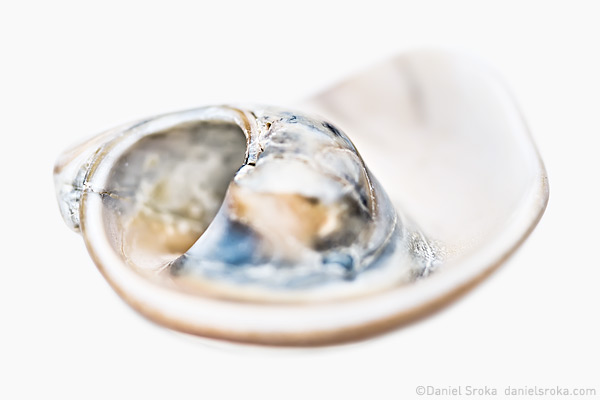 An abstraction of a sea shell. Fine art nature photograph by Daniel Sroka.