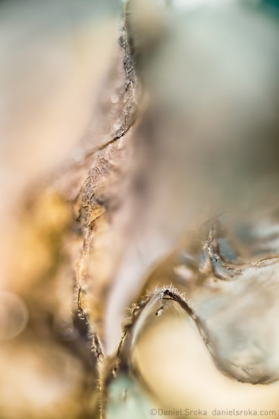 An abstract macro photograph of a leaf that has begun to dry and decay. Fine art nature photograph by Daniel Sroka.