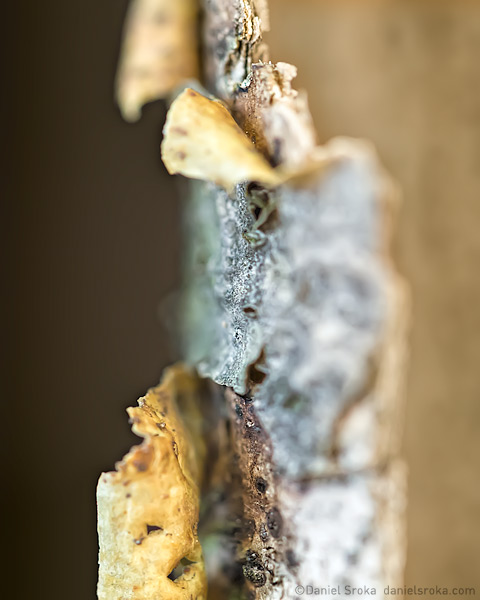An abstract of bark that has peeled off a branch. Fine art nature photograph by Daniel Sroka.