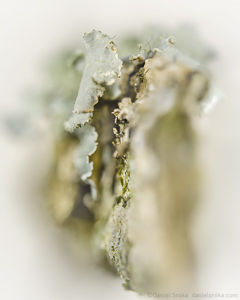 An abstract photograph of lichen on bark. Fine art nature photograph by Daniel Sroka.