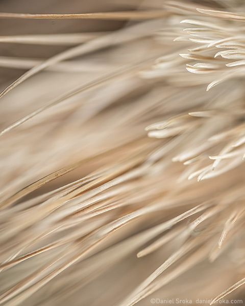 An abstract photograph of dried pine needles. Fine art nature photograph by Daniel Sroka.