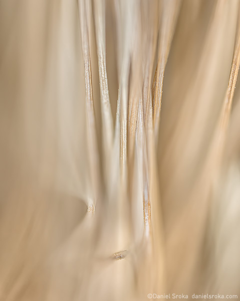 An abstracts photograph of dried pine needles. Fine art nature photograph by Daniel Sroka.