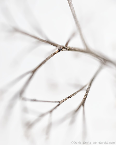 An abstract photograph of the stem of a wildflower. Fine art nature photograph by Daniel Sroka.