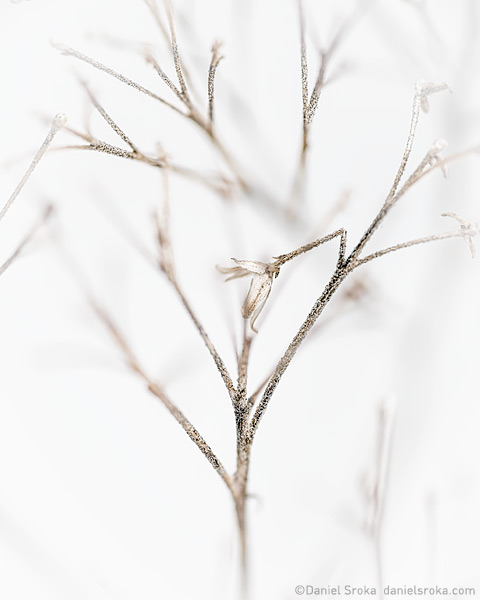 An abstract photograph of wildflower buds. Fine art nature photograph by Daniel Sroka.