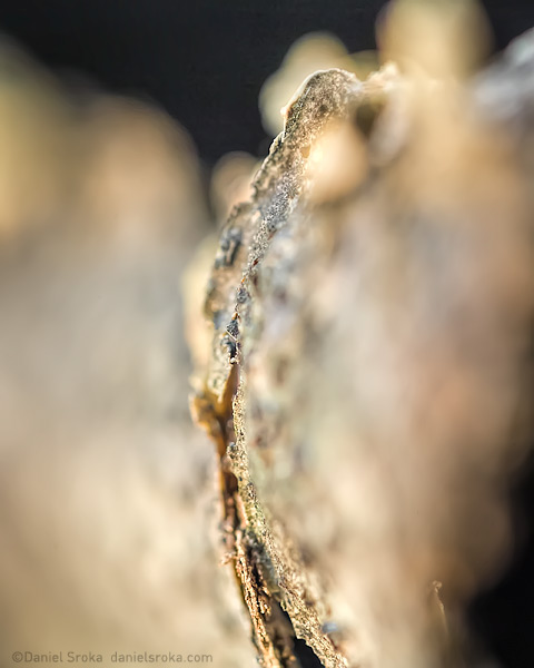 An abstract macro photograph of bark that has peeled off a branch. Fine art nature photograph by Daniel Sroka.