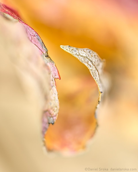 An abstract photograph of a leaf. Fine art nature photograph by Daniel Sroka.