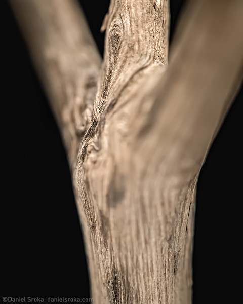 This abstract macro photograph of a stick feels like a sculpture of a person. Fine art nature photograph by Daniel Sroka.