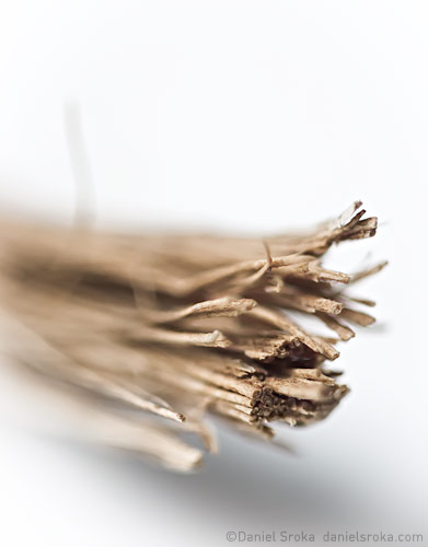 An abstract macro photograph of a broken stick, resembling a bundle of firewood. Fine art nature photograph by Daniel Sroka.