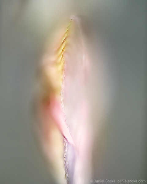 An abstract of a maple seed. Fine art nature photograph by Daniel Sroka.