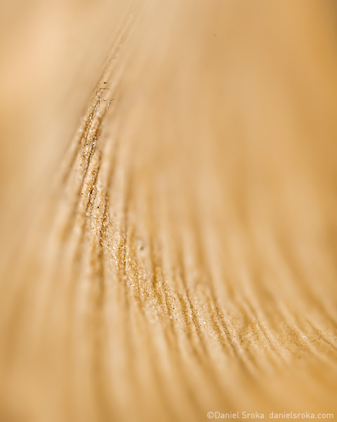 An abstract of a ginkgo leaf. Fine art nature photograph by Daniel Sroka.