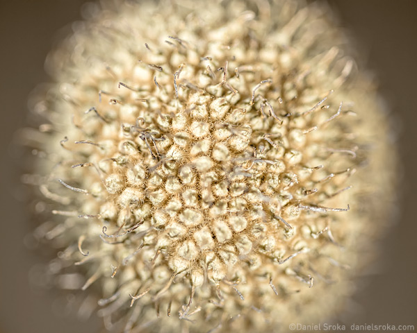 An abstract macro photograph of a seed. Fine art nature photograph by Daniel Sroka.