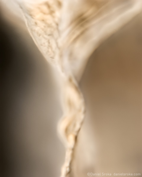 An abstract photograph of a dried leaf.  Fine art nature photograph by Daniel Sroka.