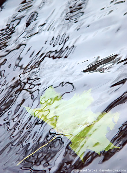 An abstract macro photograph of a leaf that has fallen into a stream. Fine art nature photograph by Daniel Sroka.