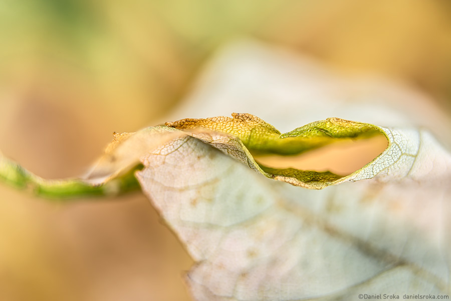 An abstract photograph of dried leaf. Fine art nature photograph by Daniel Sroka.